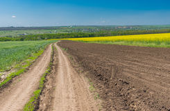 Landscape with an earth road between wheat and flowering rape agricultural fields in central Ukraine Royalty Free Stock Photo
