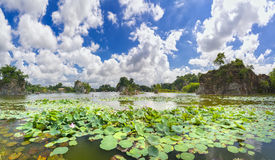 Landscape ecotourism with a large lotus pond lake. Attract tourists to resorts on weekends Stock Image
