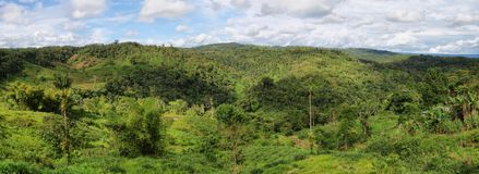 Landscape of ecuadorian jungle Stock Photos