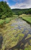 Creek, Landscape of Eifel, Germany Royalty Free Stock Image