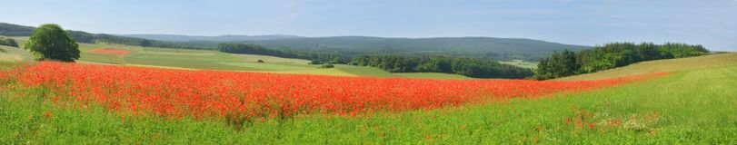 Landscape in the Eifel in spring royalty free stock photography
