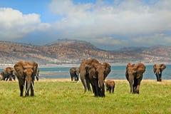 Landscape of elephants on the shoreline of Lake Kariba in Zimbabwe Stock Photo