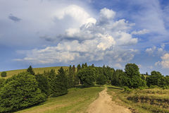 Landscape with empty forest road through the meadow Royalty Free Stock Photo