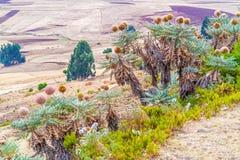 Landscape in Ethiopia near Ali Doro. Rural landscape of the farmland near Ali Doro in Ethiopia Stock Images