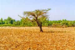 Landscape in Ethiopia near Bahir Dar Royalty Free Stock Photography