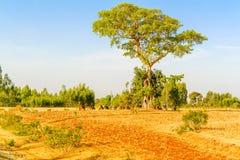 Landscape in Ethiopia near Hamusit Royalty Free Stock Photo