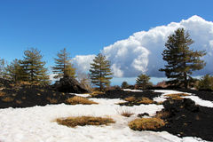 Landscape from etna volcano, larch pine woods Royalty Free Stock Photography