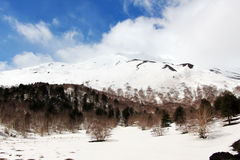 Landscape from etna volcano, with the woods Stock Photos