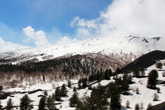 Landscape from etna volcano, with the woods Royalty Free Stock Photo