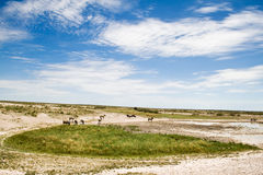 Landscape in Etosha National Park. Beautiful landscape in Etosha National Park, Namibia Royalty Free Stock Photography