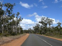 Eucalyptus wood with road. Stock Images