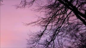Landscape evening nature stock footage