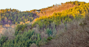 Landscape of the evening sun shinning on the fall colors Stock Photography