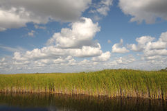Landscape in the Everglades, Florida Royalty Free Stock Photography