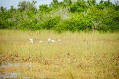 Everglades national park landscape. Landscape of everglades national park, Florida, USA royalty free stock photo