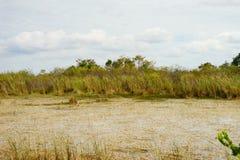Everglades national park landscape. Landscape of everglades national park, Florida, USA stock photography