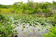 Everglades national park landscape. Landscape of everglades national park, Florida, USA royalty free stock image