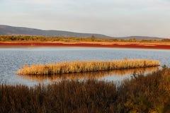 Landscape of Evros river in Greece. Stock Photos