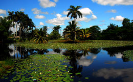Landscape. Exotic landscape with palm trees and waterlillies Stock Photo
