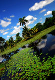 Landscape. Exotic landscape with palm trees and waterlillies Royalty Free Stock Photo