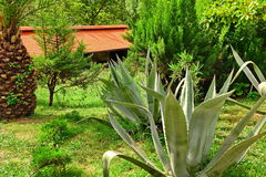 Landscape With Exotic Tropical Garden And House In The Backgroun Royalty Free Stock Photography