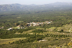 Landscape of extensive olive tree grove in Crete. Messara Valley and village near Mires. Crete Greece Stock Photo