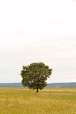 Landscape in Extremadura center of Spain Stock Photos