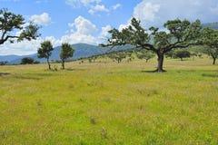 Landscape of Extremadura (Spain) Stock Photos