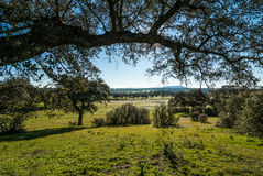 Landscape of Extremadura in Spain, dehesa Stock Images