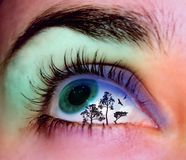 Landscape eye. Eye with tree landscape on it art illustration royalty free stock images