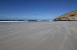 Landscape Falklands Malvinas. Beach landscape of the Falklands Malvinas Stock Image