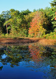 Landscape in the fall. Reflexions of trees in a pond in the fall Royalty Free Stock Images