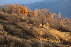 Landscape in fall season. Beautiful landscape and trees in fall season Royalty Free Stock Photography