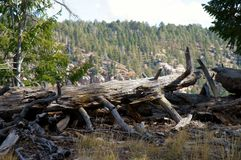 A landscape with a fallen tree. Fallen tree, North Rim forest, Grand Canyon Stock Image