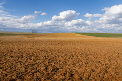 Landscape with Fallows and Crop. Landscape with fallow land recently plowed and cereal crops. A sunny day with cottony clouds royalty free stock images