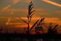 Landscape fantastic sunset on the wheat field sunbeams glare.  stock image
