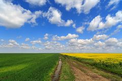 Landscape with a farm field Royalty Free Stock Image