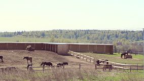 Landscape of a farm. Mares and foals grazing stock footage