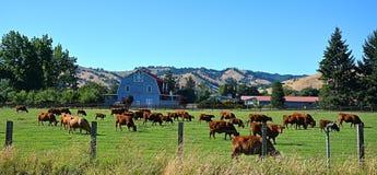 Landscape. Farm property in the Roseburg Oregon area Royalty Free Stock Image