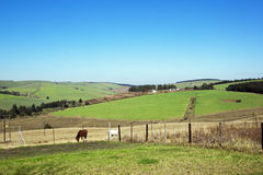 Landscape Farm View of Horses and Sugar Cane Fields Stock Images