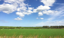 Landscape of farmland in Scotland, UK Royalty Free Stock Photography