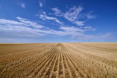 Harvested Grain Field Canadian Prairies stock image