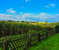 Landscape with fence and cornfield Stock Images