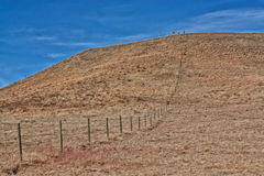 Fences Forever. Landscape of a fence line up a hill in the prairies Stock Photography
