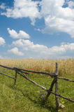 Landscape with fence and wheat. Rural landscape with fence, wheat and poppies Royalty Free Stock Photos