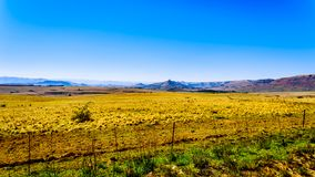 Landscape with the fertile farmlands along highway R26, in the Free State province of South Africa royalty free stock images