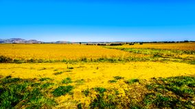 Landscape with the fertile farmlands along highway R26, in the Free State province of South Africa royalty free stock photo
