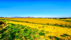 Landscape with the fertile farmlands along highway R26, in the Free State province of South Africa. With mountain range in the background stock images