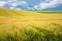 Landscape of field Stock Photography