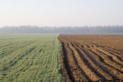 Landscape with field. On spring morning Royalty Free Stock Photo